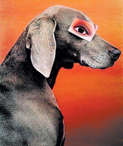 'Artículo para el ojo' (1994), fotografía de  William Wegman.