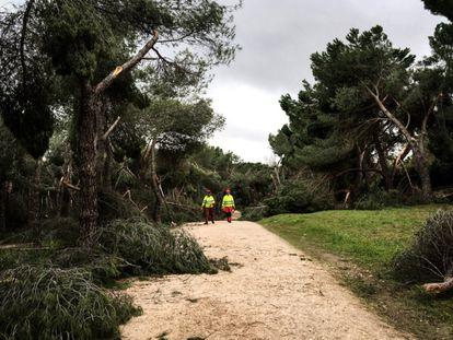 Dos jardineros de la Casa de Campo, en un camino lleno de ramas caídas.