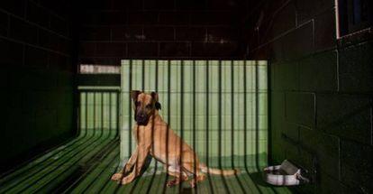 Las penas por maltrato animal van de tres meses a un año de prisión