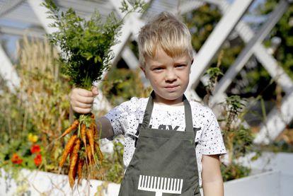 Un niño sujeta unas zanahorias.
