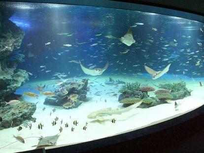 Imagen de archivo del tanque Sunshine Lagoon, en el acuario Sunshine, en Tokio.