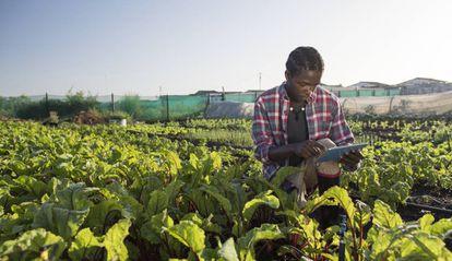 Un joven agricultor verifica el estado de su cultivo en su tablet.