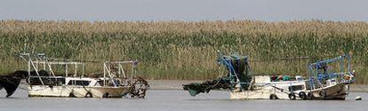 Dos de las embarcaciones ilegales que todavía pescan angulas en el Guadalquivir, el pasado jueves a la altura del término municipal de Lebrija (Sevilla).
