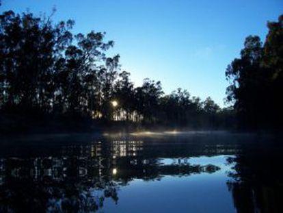 El río Murray está al 18% de su capacidad.