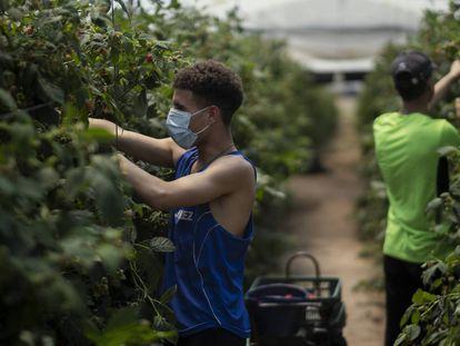 Dos de los jóvenes migrantes que recogen frutos rojos en la empresa Los Mimbrales, en la localidad onubense de Almonte y que son ayudados por la ONG Voluntarios por Otro Mundo.