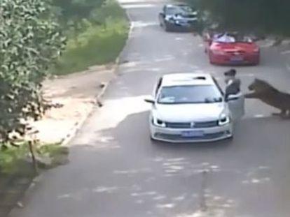 La víctima intentó ayudar a una compañera que desobedeció la prohibición de abandonar el vehículo durante una discusión con el conductor