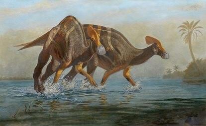 Illustration of the 'Tlatolophus galorum'.