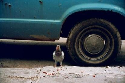 Una paloma en una acera de Nueva York en 1993, material de 'Photo No-Nos: Meditaciones sobre lo que no fotografiar' (Aperture, 2021).