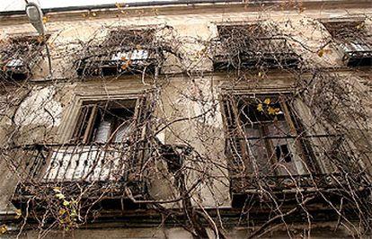 La parra sale por el portal de la calle de Antonio Grilo, 8, y se encarama por toda su fachada.
