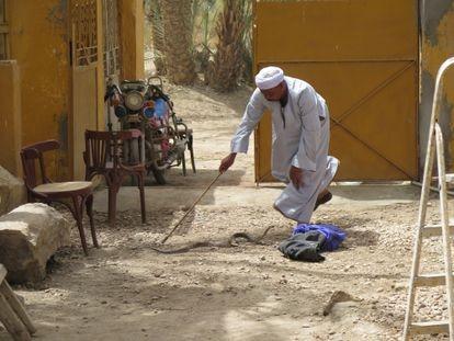 El capturador de serpientes (H'awi) trata de atrapar a una cobra en la casa de la misión de la fundación arqueológica Clos-Museu Egipci en Sharuna (Egipto).