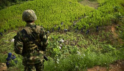 Erradicadores de cultivos de coca en Antioquia, en una imagen de archivo.