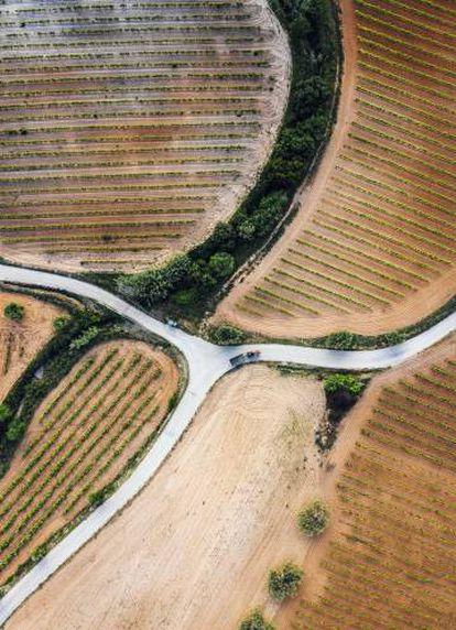 Viñedos a vista de dron entre Vilafranca y Sant Sadurní.