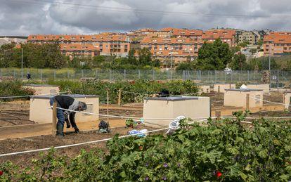 En la orilla del río Tormes, en Salamanca, hay más de 600 huertos urbanos. Además de proporcionar alimentos a los vecinos, contribuyen  a la recolonización vegetal y a acercar la biodiversidad.