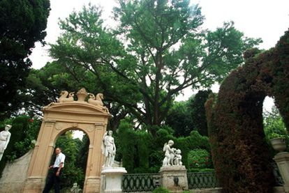 El ' Ginkgo biloba' del jardín de Monforte, en Valencia.