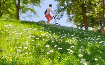 Un ciclista y chirivitas en una pradera del parque del Retiro en Madrid.