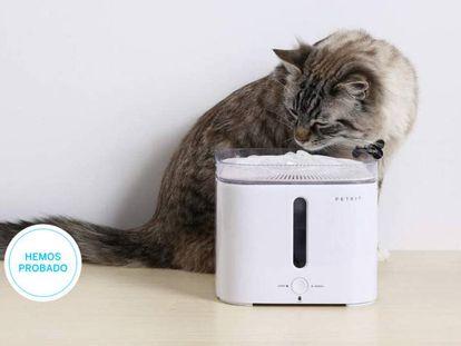 Ponemos a prueba las mejores fuentas de agua para mascotas que puedes tener en casa.