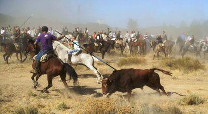 El torneo del toro de la Vega, que se celebra en Tordesillas.