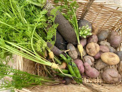 Cesta con zanahorias, guisantes, nabos y patatas feas. J. C. CAPEL