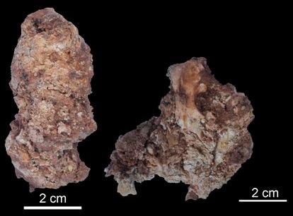 Heces fosilizadas de un lince ibérico de hace 30.000 años.