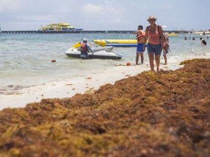 Un manto de algas cubre una parte del arenal de Playa del Carmen (México).