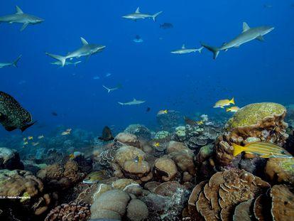 Los arrecifes de coral sanos mantienen la riqueza de la biodiversidad marina.