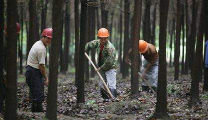 Trabajadores de una granja en China, en 2007.