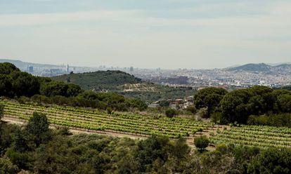 Barcelona desde los viñedos de Alta Alella.