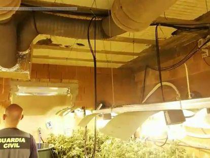 Una de las plantaciones de marihuana en las que la Guardia Civil ha decomisado aparatos de aire acondicionado. En vídeo, un agente muestra los aparatos requisados.