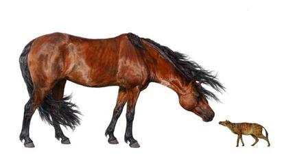 Ilustración de un caballo actual de 500 kilos (izquierda) cara a cara con un 'Sifrhippus sandrae', del tamaño de un gato pequeño, que vivió hace 55 millones de años.