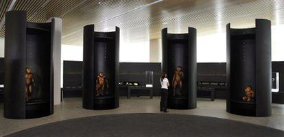 La sala de los homínidos del nuevo Museo de la Evolución Humana, en Burgos