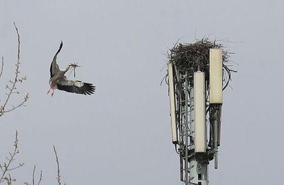 Una cigüeña traslada ramas al nido que está construyendo.