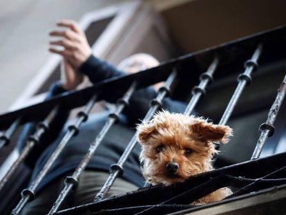 Un perro asomado a un balcón durante el aplauso diario a los sanitarios.