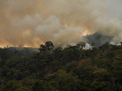 Un incendio en el bosque de Pozuzo, en Perú.