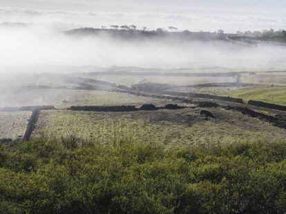 La niebla envuelve el paisaje de Nisdafe en los altos de Valverde, al norte de la isla de El Hierro.
