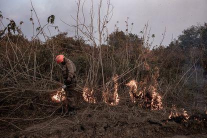 Fuego contra fuego: los bomberos utilizan la táctica de provocar un incendio que reduce la capacidad del fuego para continuar propagándose en el bosque seco.