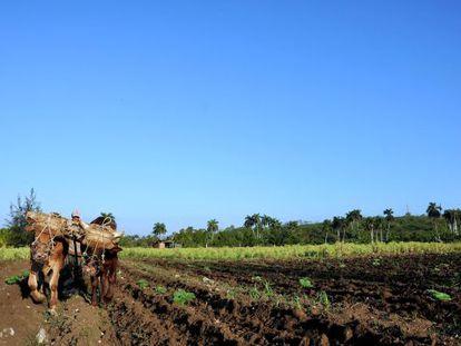 Un campesino trabaja su tierra en Brasil.