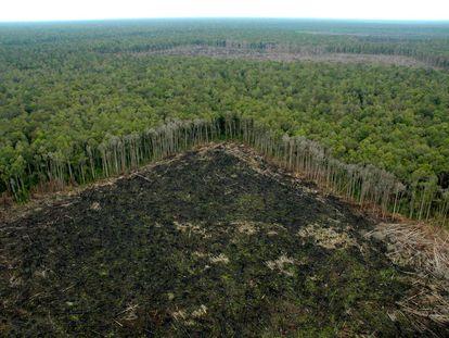 Selva talada ilegalmente fuera de las concesiones de APP, en Riau (Sumatra).