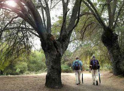 Dos paseantes caminan entre los fresnos de la ribera del río Manzanares en El Pardo.