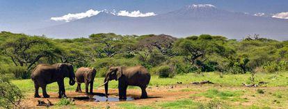 Un grupo de elefantes en el parque natural en el que falleció el turista español hace una semana.