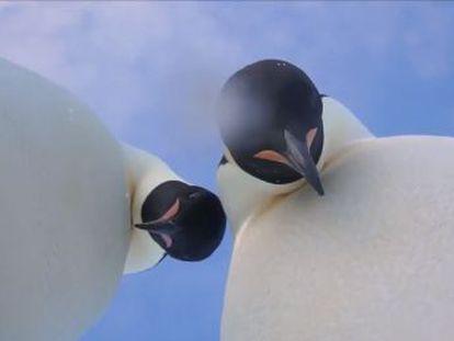 Los animales hallaron una cámara y se hicieron un vídeo que ha logrado más de 130.000 visualizaciones