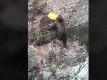 Los oficiales tardaron cuatro horas en rescatar al animal en una ciudad al noroeste de China