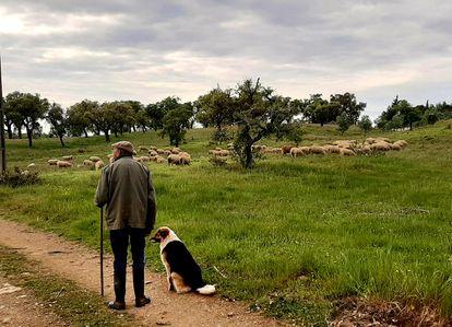 Horacio pastorea sus ovejas en la aldea de Santa Margarida da Serra, en el Alentejo portugués.