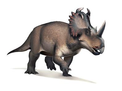 Dinosaurios En El Pais Algunos fueron bípedos, es decir que caminaban a dos patas, otros cuadrúpedos que caminaban a cuatro patas y algunos, como ammosaurus e iguanodon, podían estar tanto a dos como a cuatro patas. dinosaurios en el pais
