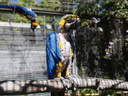 Un santuario en Toledo acoge cientos de animales recuperados del comercio y la tenencia ilegal