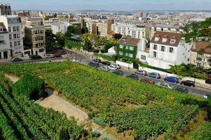 Clos-Montmartre, un viñedo de Montmartre, París.