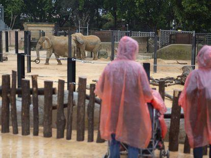Visitantes en el zoo de Barcelona.