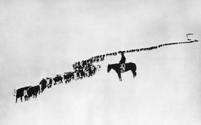 Un vaquero en el Medio Oeste de Estados Unidos vigila su ganado.