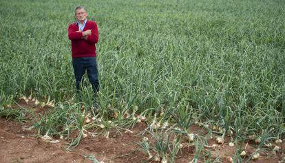 José Alapont, agricultor de Silla, en un campo recién asaltado.