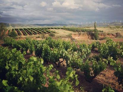 Viñedos del municipio de Quel en Rioja Oriental con molinos de la Sierra de Yerga al fondo.