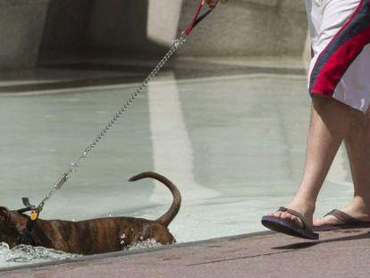 Un perro se refresca en una de las fuentes de la Plaza del Pilar de Zaragoza, ayer al mediodía.